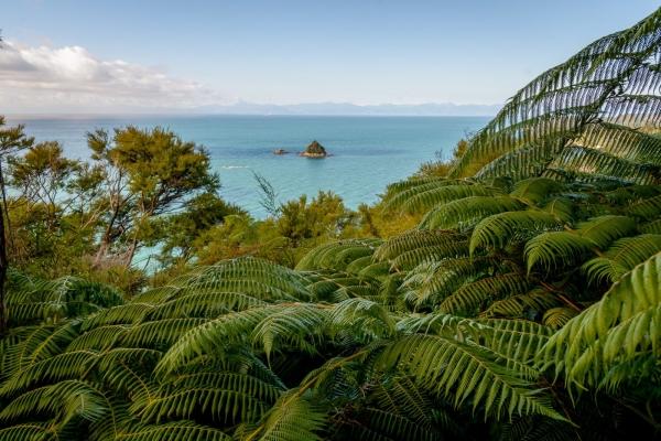 Drzewa paprociowe w Abel Tasman