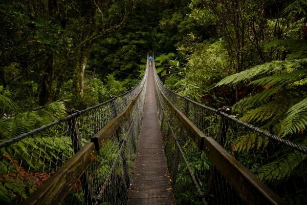 Most linowy w Kaitoke Regional Park