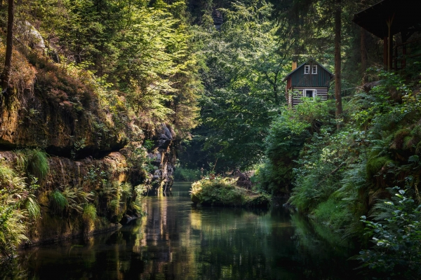 Piękny domek w otoczeniu zielonego lasu